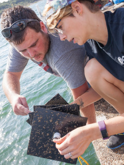 Joey Moore and Brittany Lokcu examine a sampler they pulled up from Lake Belton with zebra mussel...